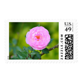 Pink roses stamps