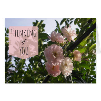 Pink Roses Thinking of You Card