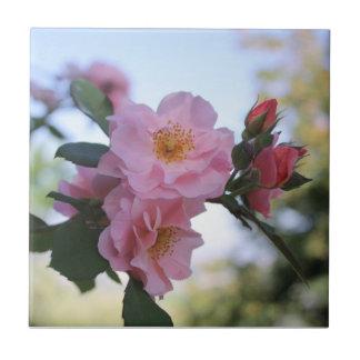 Pink Roses Tile