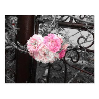 Pink Roses Vintage Style Postcard
