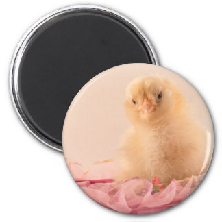 Pink Ruffle Baby Chick Photo Magnet