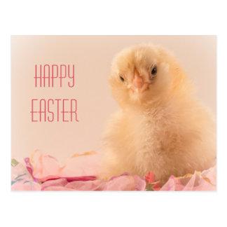 Pink Ruffle Baby Chick Photo Postcard