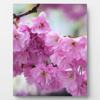 Pink Sakura Cherry Plaque