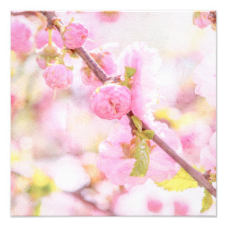 Pink sakura flowers - Japanese cherry blossom Photo Print