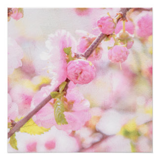 Pink sakura flowers - Japanese cherry blossom Poster