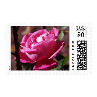 Pink Satin Postage Stamps