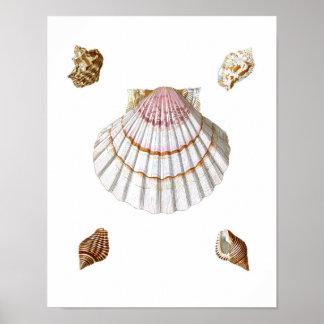 Pink Scallop Sea Shell Print no.19 Beach Decor