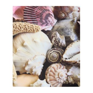 Pink Scallop Seashells Collection Photography Metal Print
