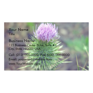 Pink Scotch thistle blossoming Business Card Template