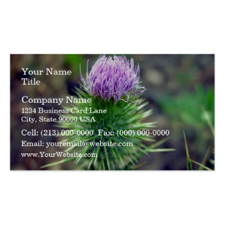 Pink Scotch thistle blossoming Business Card