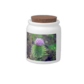 Pink Scotch thistle blossoming Candy Dishes