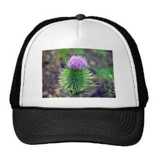 Pink Scotch thistle blossoming Trucker Hat