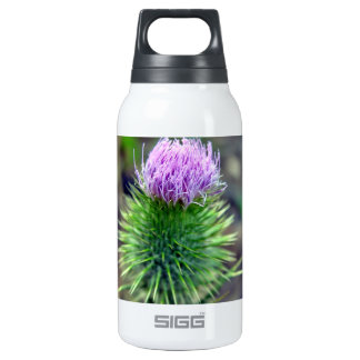 Pink Scotch thistle blossoming 10 Oz Insulated SIGG Thermos Water Bottle