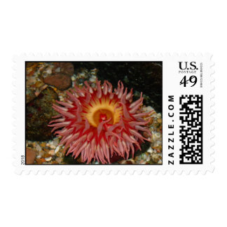 Pink Sea Anenome Stamp