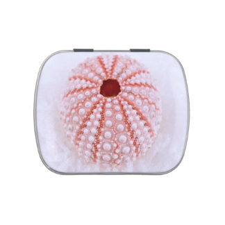 Pink Sea Urchin in Snow Candy Tin