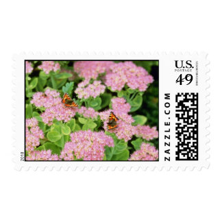 Pink Sedum Autumn Joy With Butterflies flowers Postage Stamps