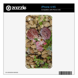 pink shells and flower heart skin for the iPhone 4