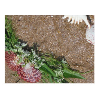 pink shells and white flowers on beach sand postcard