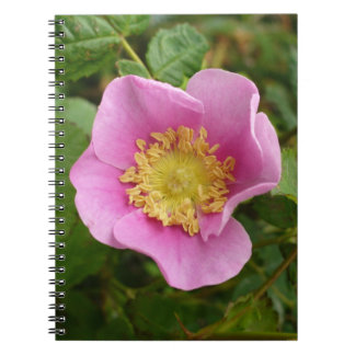 Pink Shrub Rose Blossom Journal