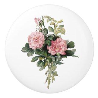 Pink Shrub Rose Botanical Art Round Knob