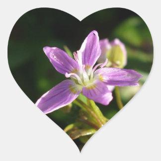 Pink Siberian Spring Beauty Heart Sticker