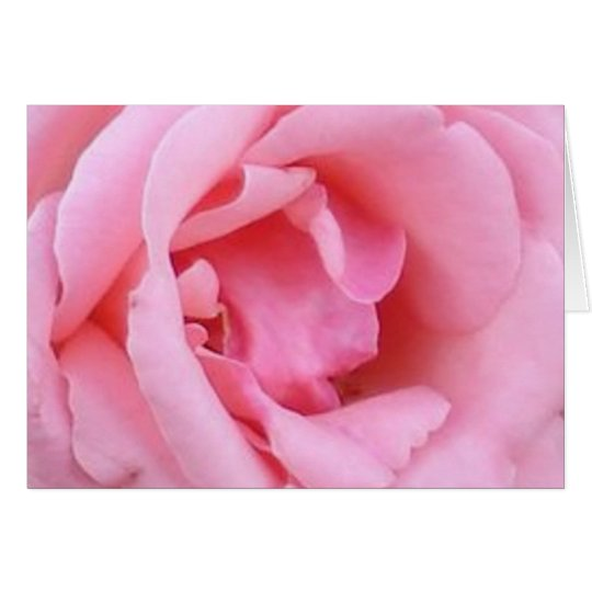 Pink Single Rose Closeup Card