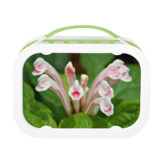 Pink Skullcap Lunchbox