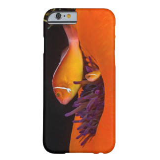 Pink Skunk Clownfish on the Great Barrier Reef Barely There iPhone 6 Case