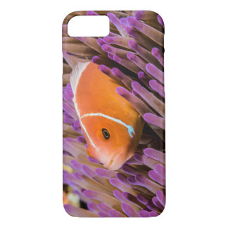 Pink Skunk Clownfish on the Great Barrier Reef iPhone 8/7 Case