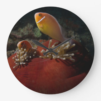 Pink Skunk Clownfish on the Great Barrier Reef Large Clock