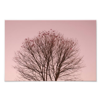 Pink Sky and Tree Branches Photo Print