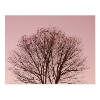 Pink Sky and Tree Branches Postcard