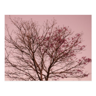 Pink Sky and Tree Photograph Postcard