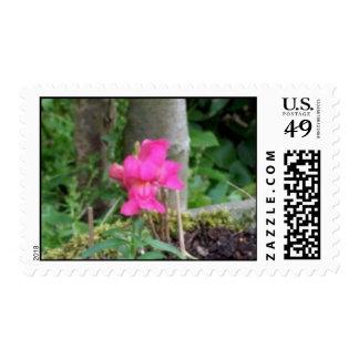 Pink Snap-Dragon Stamps