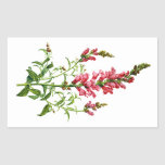 Pink Snapdragon Drawn From Nature Stickers