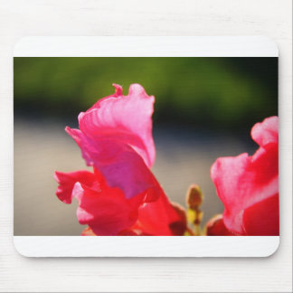 Pink Snapdragon Mouse Pad