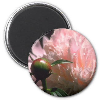 Pink Soft light flowers Magnets