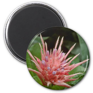 Pink Spiky-Toothed Flower flowers Magnets