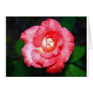 Pink splendor card