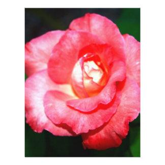 Pink splendor flyers