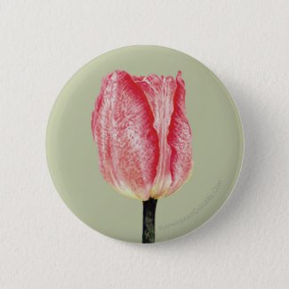 Pink Spotted Tulip Button