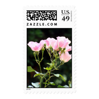 Pink Spray of Roses Stamps