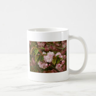 Pink Spring Blooming Japanese Kwanzan Cherry Coffee Mug