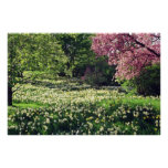 Pink Spring blossoms flowers Posters