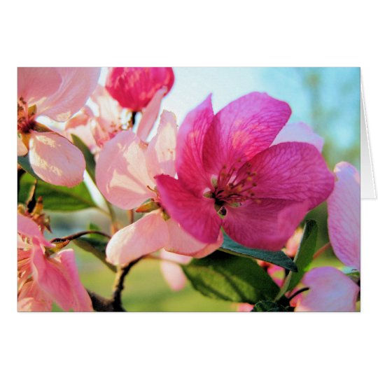 Pink Spring Blossoms Note Card