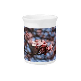 pink spring blossoms pitchers