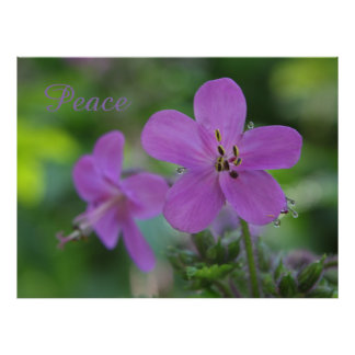 Pink Spring Flowers Poster