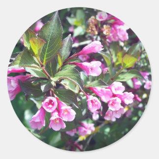 Pink Spring Weigela Classic Round Sticker
