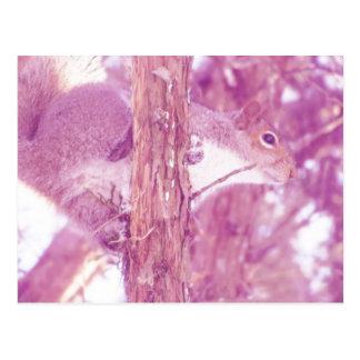 Pink Squirrel Photo Postcard