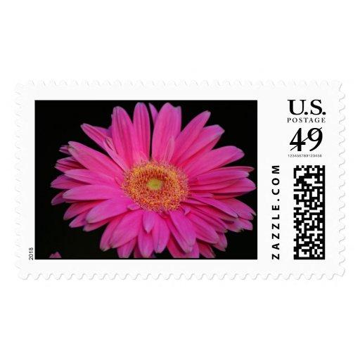 Pink Stamp